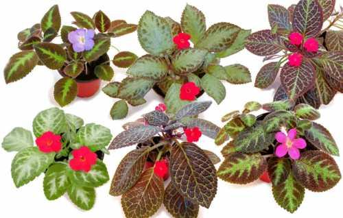 Почва для посадки должна быть рыхлой и плодородной, со слабокислой или нейтральной реакцией