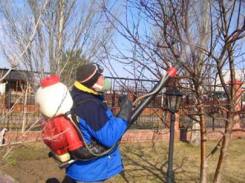 Весенняя подготовка к прививкам деревьев и борьба с вредителями