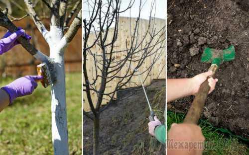 Нужно ориентироваться на заселенность дерева вредителями