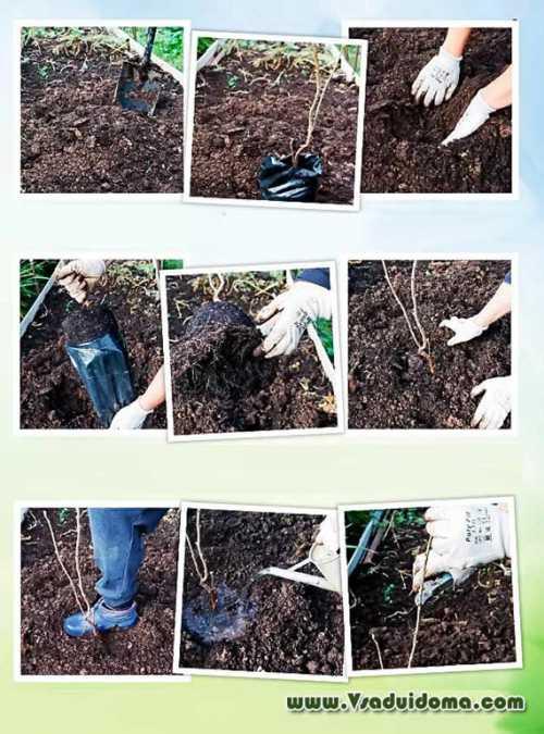 Дачник, садовод и огородник анонимно