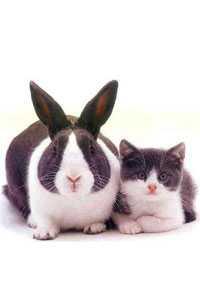 Новый 2011 год Кролика Кота