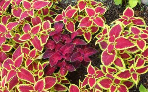 Для быстрого прорастания семян оптимальной температурой считается градусов