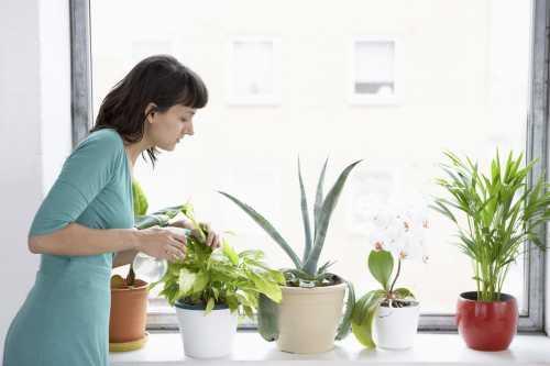 Как ухаживать за комнатными растениями в холодное время года