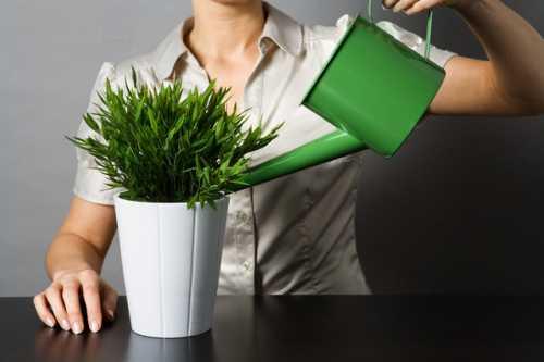 Зеленое жидкое мыло не только очищает листья растений от пыли, но и защищает их от вредителей
