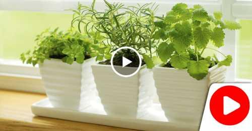 Вырастим зелень в комнатных условиях