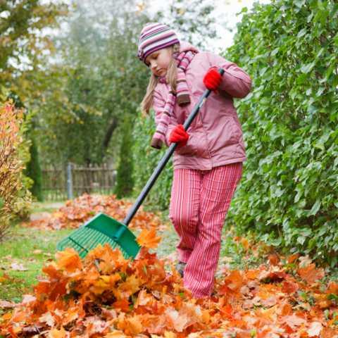 Если работа в саду связана с подготовкой грядок, тогда можно приготовить компост из перепревшей травы, ботвы и навоза