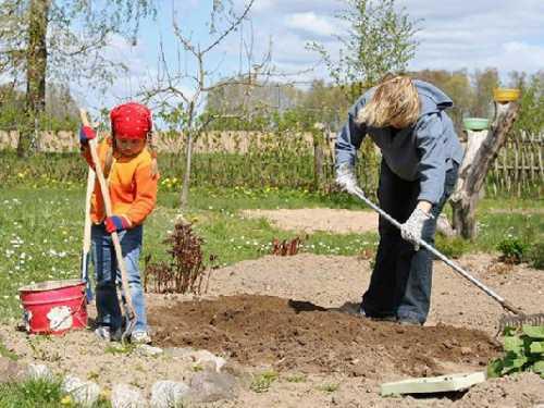 Завершаем осенние работы в саду, огороде