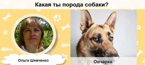 ТЕСТ: Какая ты порода собаки
