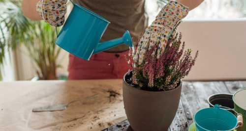Секреты правильного полива комнатных растений