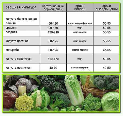 Во всех случаях, необходимо заранее приготовить тару и плодородный субстрат