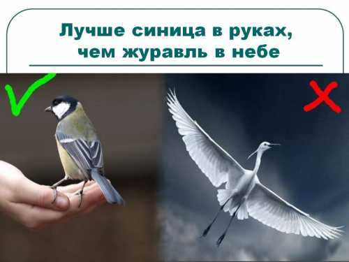Синица в руках или журавль в небе