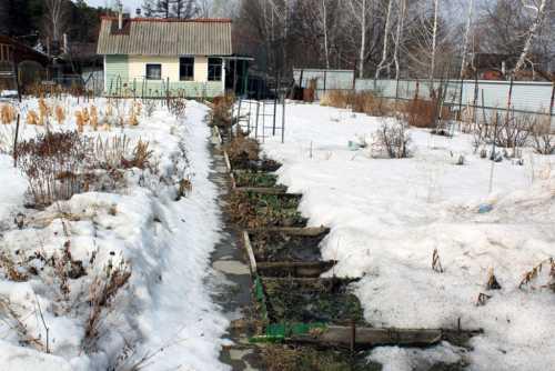 Работы в саду в январе
