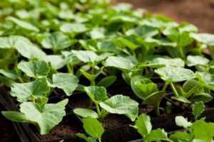 Начните добавлять садовую мульчу и удобрения для снабжения почвы необходимыми питательными веществами