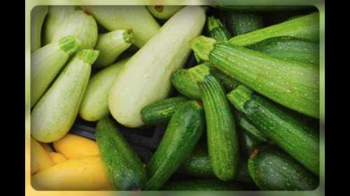 Цуккини Как выращивать цуккини на вашем садовом участке