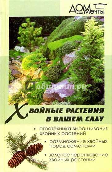 Хвойные растения в вашем саду