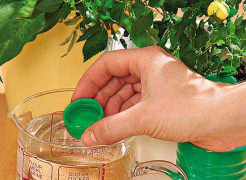 Продукт, без которого, кажется не мыслимым любое блюдо нашей кухни, лук, можно использовать не только в кулинарии, но и в садоводстве